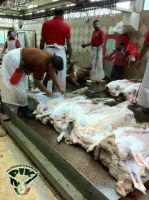 Kuwait_sheep_on_Eid3