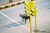 donkey_on_the_signal